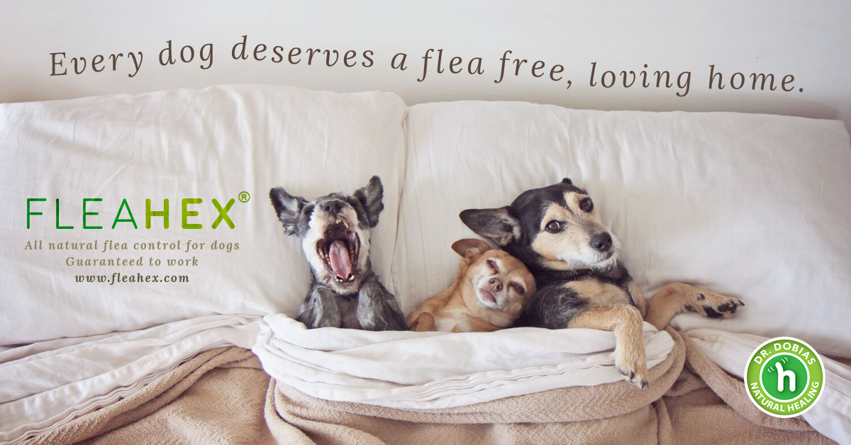 Do dogs make people happy? - dogs photo ad about fleahex