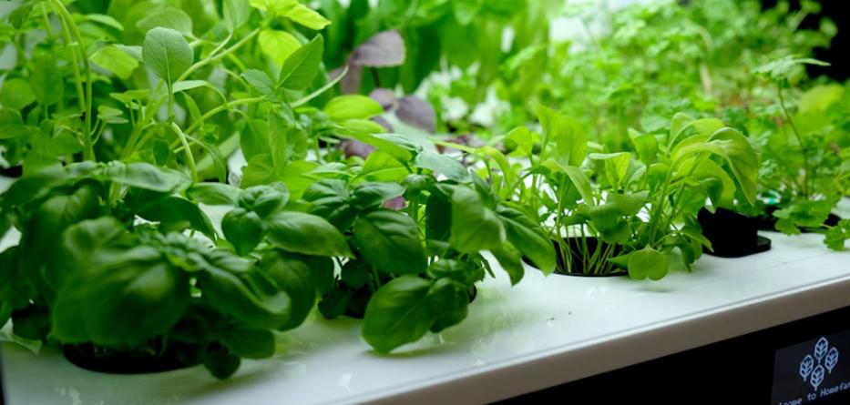 Grown own fresh food