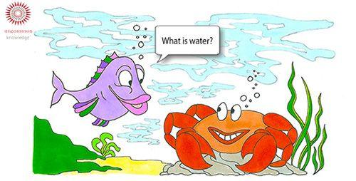 Fish and Crab Cartoon